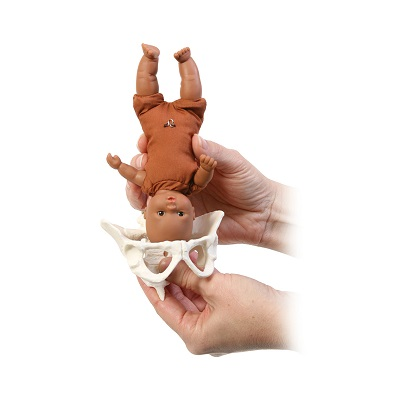 CBG-Mini-Model-Set-Pocket-Uterus-Baby-and-Pelvis-6-Pieces_media-03