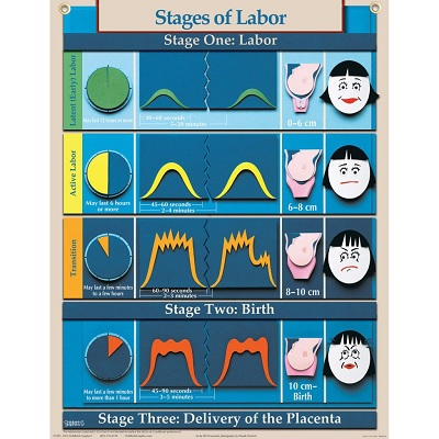 Penny-Simkins-stages-of-labor
